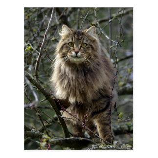 Postal de pelo largo del animal del gato de Tabby