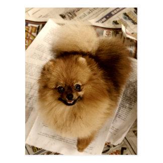 Postal de Pomeranian