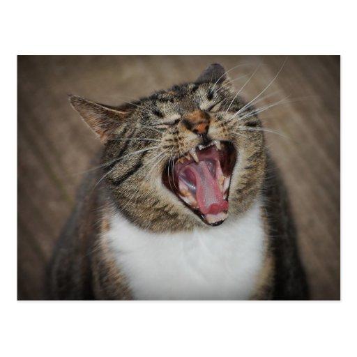 Postal de risa del gato de la ha ha ha