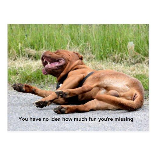 Postal de risa divertida del perro