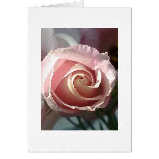 Postal de rosa rosa