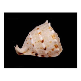 Postal de Shell de la concha