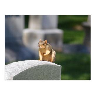 Postal de Skwerl de la piedra sepulcral
