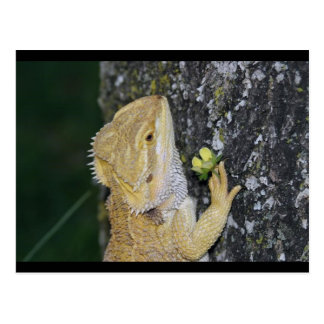 Postal de Tenchi (dragón barbudo)