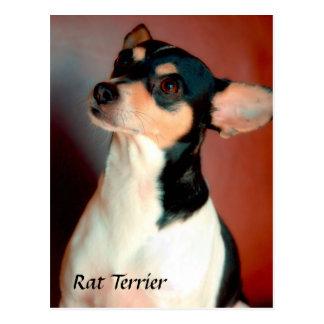 Postal de Terrier de rata