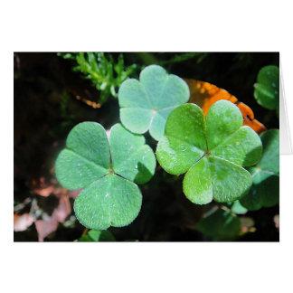 Postal de tres hojas verdes de trébol, en blanco tarjeta de felicitación