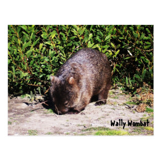 Postal de Wally Wombat