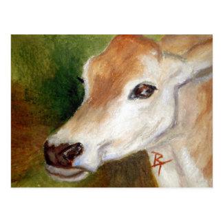 Postal del aceo de la vaca del jersey
