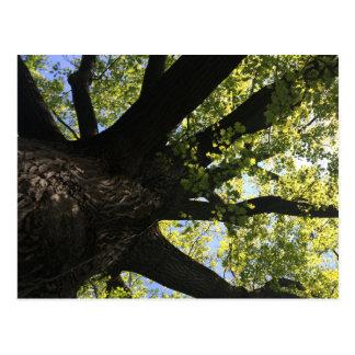 Postal del árbol de la luz del sol