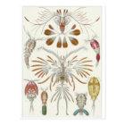 Postal del arte de Ernst Haeckel: Copepoda