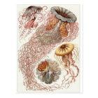 Postal del arte de Ernst Haeckel: Discomedusae