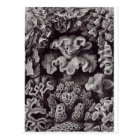 Postal del arte de Ernst Haeckel: Hexacoralla