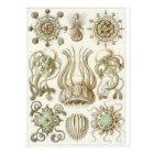 Postal del arte de Ernst Haeckel: Narcomedusae