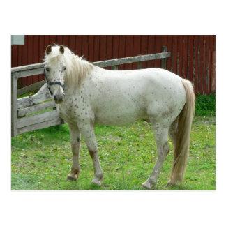 Postal del caballo blanco