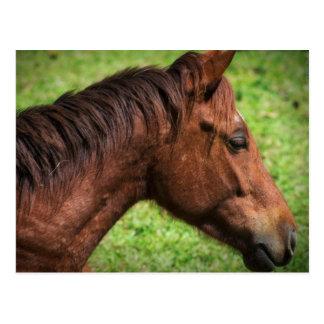 Postal del caballo de Belice de los establos de