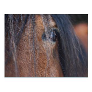 Postal del caballo de proyecto