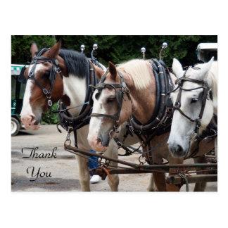 Postal del caballo de proyecto 830 TY
