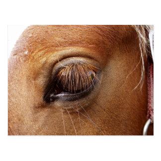 Postal Del caballo/del potro del ojo del cierre