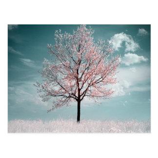 Postal del cerezo