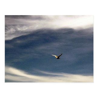 Postal del cielo de la gaviota