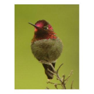 Postal del colibrí de Ana