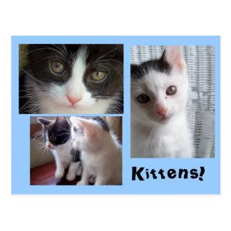¡Postal del collage del gatito!!