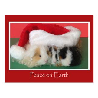Postal del conejillo de Indias del navidad del