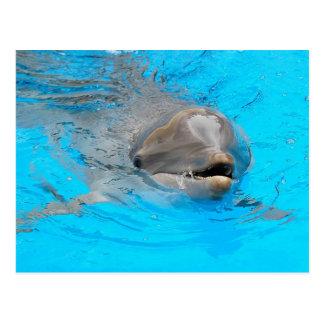 Postal del delfín