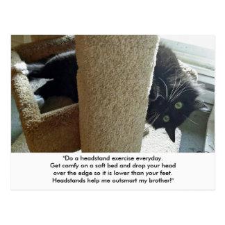 Postal del ejercicio del Headstand del gato negro