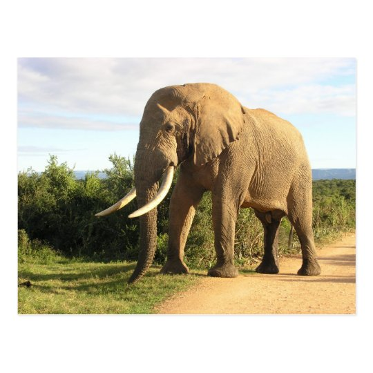 Postal del elefante de Bull