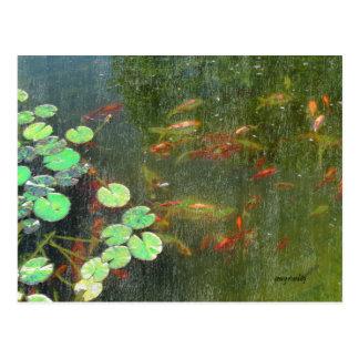 Postal del estanque de peces