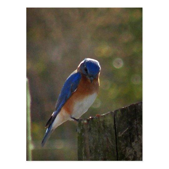 Postal del este del Bluebird