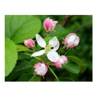 postal del flor de la manzana