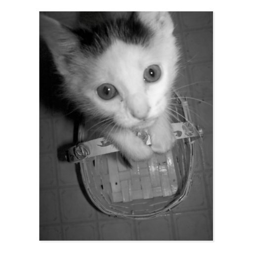 postal del gatito del bambam