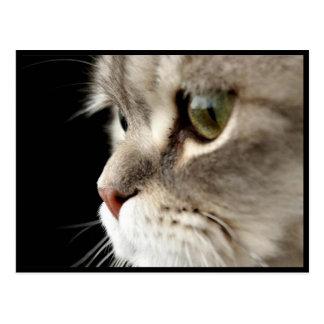 Postal del gatito del Para arriba-Cierre