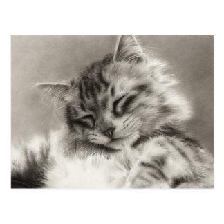 Postal del gato de Coon de Maine del Sleepyhead