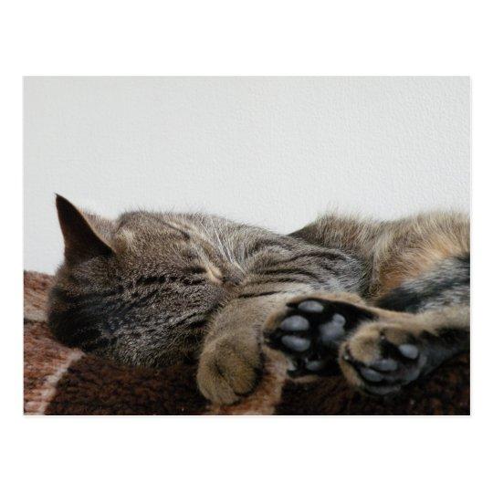 Postal del gato el dormir
