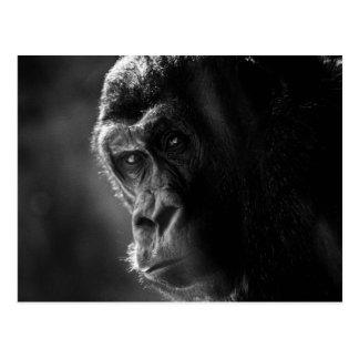 Postal del gorila de la madre