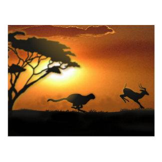 Postal del guepardo y del Gazelle