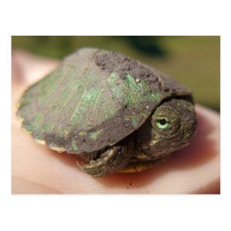 Postal del Hatchling de la tortuga