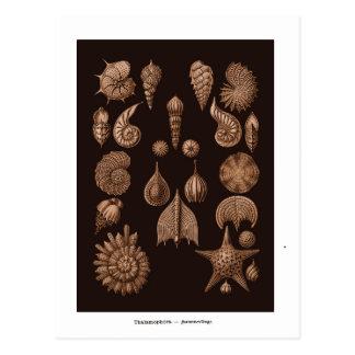 Postal del ilustracion de la vida marina del