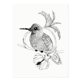 Postal del ilustracion del pájaro de Colibri