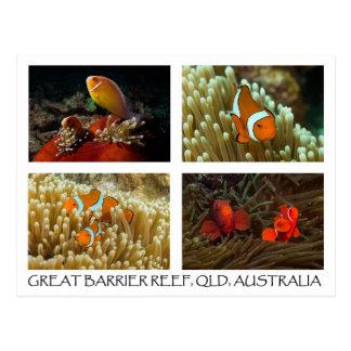 Postal del mar de coral - Clownfish