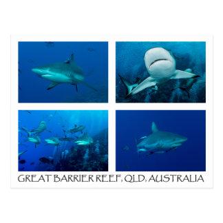 Postal del mar de coral - tiburones del filón