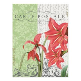 Postal del Navidad-Amaryllis del vintage