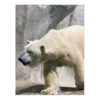 Postal del oso polar