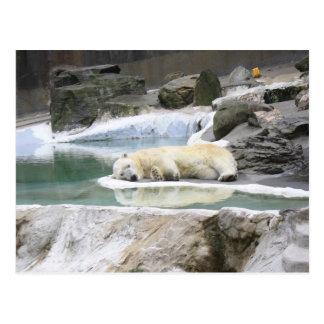 Postal del oso polar el dormir