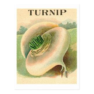 postal del paquete de la semilla del nabo del