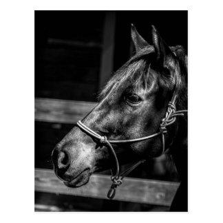 Postal del perfil del caballo