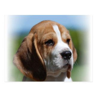 Postal del perrito del beagle